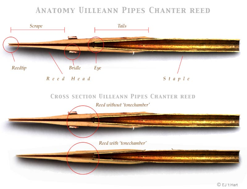 Chanter Reed Cross Section